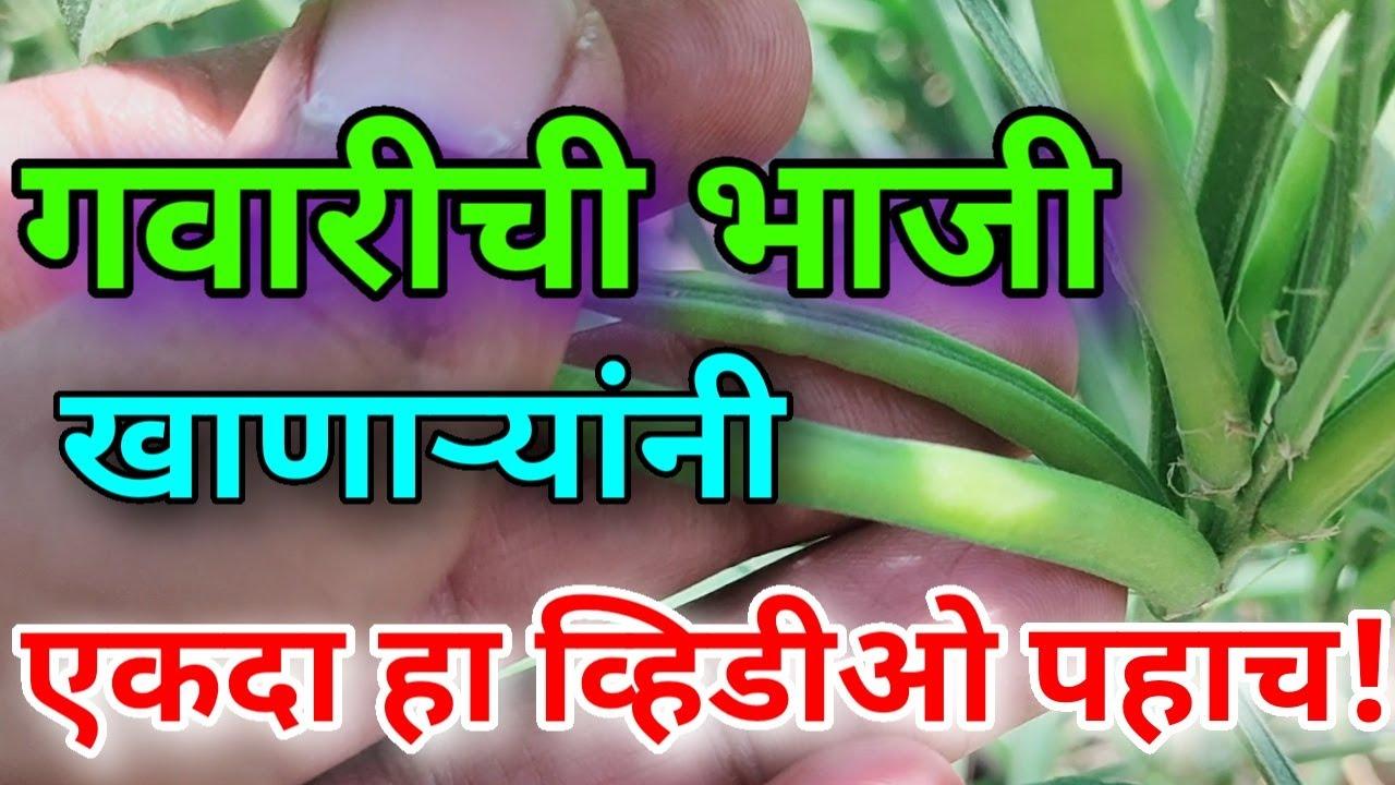 गवार खाण्याचे 11 जबरदस्त फायदे | Gawar che 11 fayde | Health benefits of Guar in Marathi