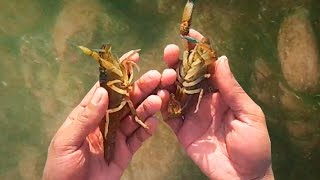 Pescando camarones con la mano - fishing shrimp by hand- camara Coolbox HD 1080