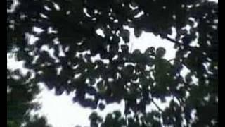 видео Волконское ущелье (Сочи): фото и отзывы — НГС.ТУРИЗМ