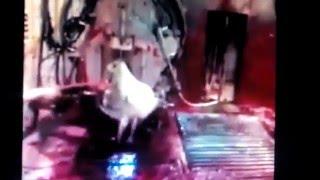 Repeat youtube video Marha legyilkolása