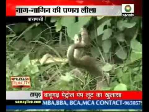 Varanasi: Snake meting caught on camera