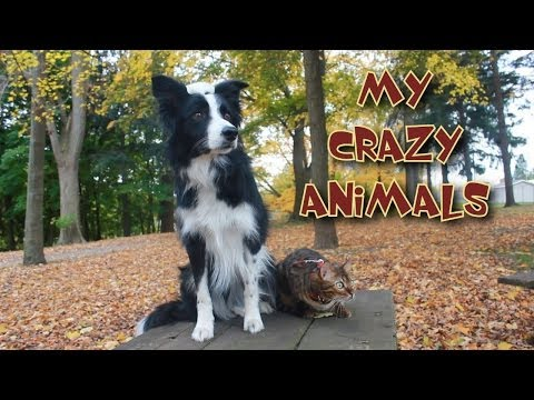 I Love My Crazy Animals