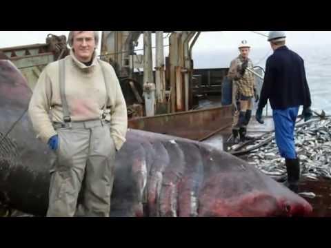 صيادين يعثرون على شيء غريب في شبكتهم اثناء الصيد