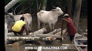 ABC  da Amazônia - Maromba