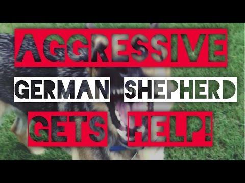 Aggressive German Shepherd-Dog training with America's Canine Educator-