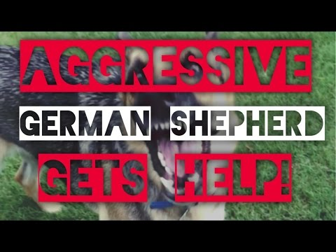Aggressive German Shepherd-Dog training with America's Canine Educator