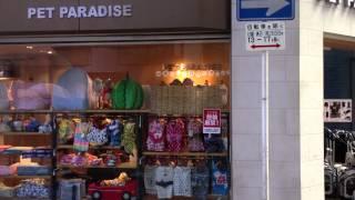 일본에서 가장 이쁜 애견용품 샵 / 펫 파라다이스 pe…
