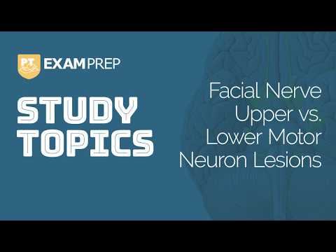 Facial nerve - Origin, Function, Pathway & Branches | Anatomy Tutorial.