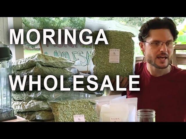 Moringa Wholesale