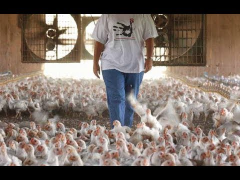 Obama's Game of Chicken: How The Obama Admin Tried to Take on Big Agriculture (with Lina Khan)
