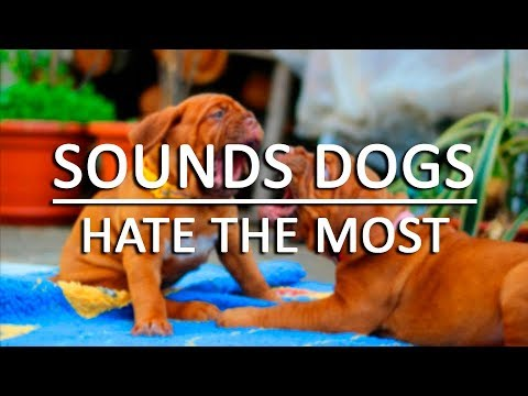 10 Sounds Dogs Hate the Most HQ