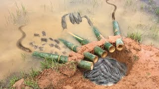The first Trap Can Catch Alot of fish & Crabs And Eels By 5 Bambo With deep Hole thumbnail