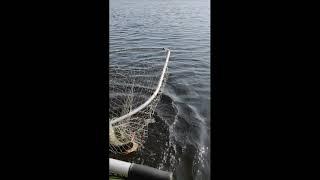 Рыбалка перед нерестом на базе у Мхалыча