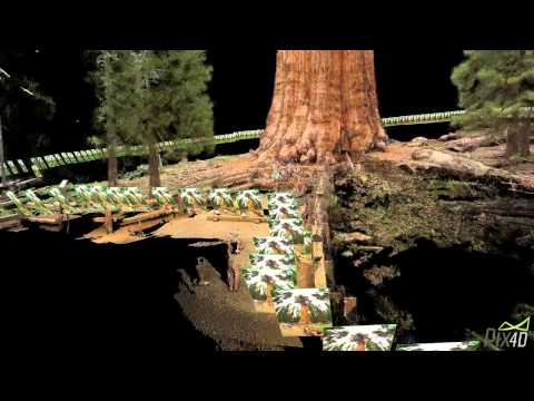 Pix4D - General Sherman Tree