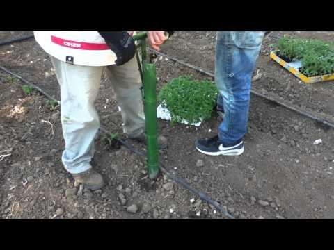 Piantabulbi come piantare i bulbi nell 39 orto doovi for Piantine ortaggi