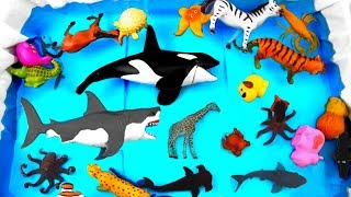 #learncolors With Wild Animals For Kids | Animal Toys For Kids in Blue Pool
