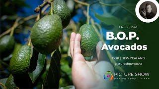 Freshmax Avocados