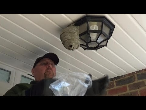 Destroy a Wasps Nest by Hand With a Plastic Bag - Quick and Easy