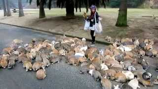 It's Always Bunny Rush Hour on This Japanese Island