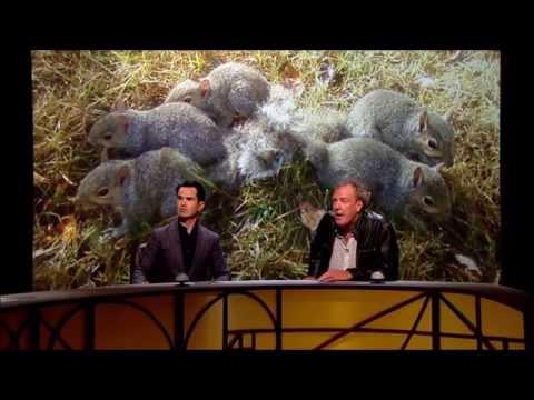 Jeremy Clarkson  QI  Squirrels  Hilarious Outburst
