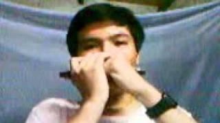 Tiểu đoàn 307 - harmonica