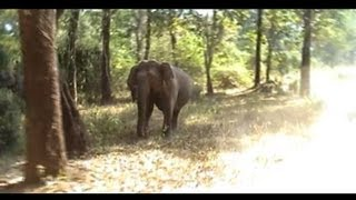 Wildlife Safari India - Video of Wildlife Safari in Wayanad Forest South India