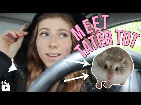 PREPARING FOR A NEW HAMSTER | Meet Tater Tot