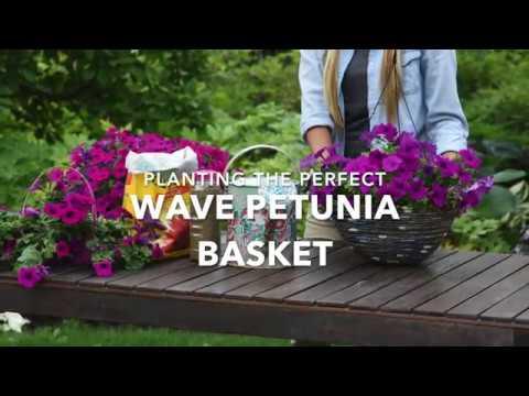 Planting The Perfect Wave Petunia Hanging Basket Full Version