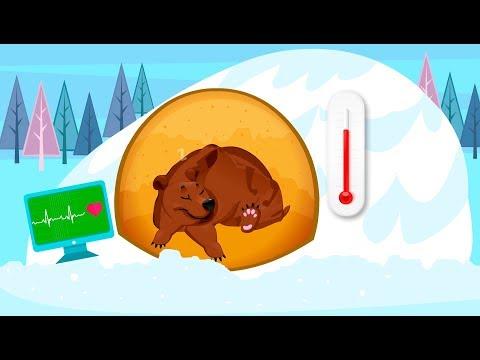 Зимняя спячка | Почему животные впадают в зимнюю спячку | Обучающее видео для детей