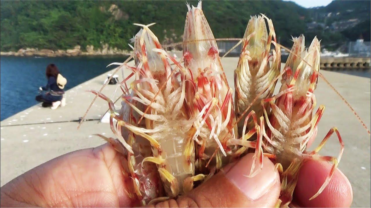 お盆の海に堤防からまさかの活きたエビを貰い沈めてみたら出てきた生物に驚いた!