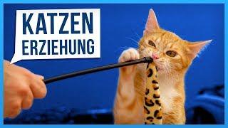 Wie man Katzen erzieht. (geht wirklich!... total...)