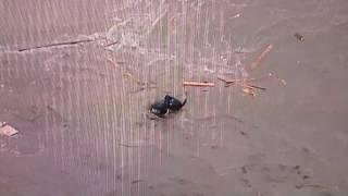 鬼怒川で堤防決壊男女が濁流に流されるシーン 茨城県・常総市 thumbnail