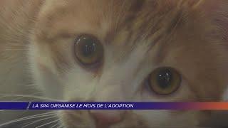 Yvelines | La SPA organise le mois de l'adoption