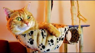 Мама Киса-Смешное видео про котов.