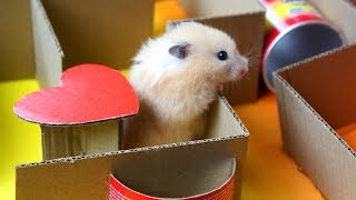 - Hamster KING OF THE HILL Maze