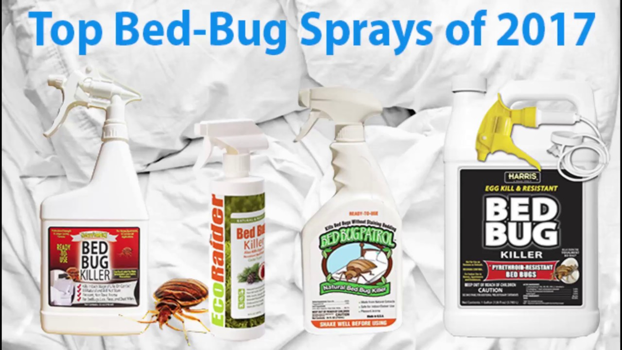 top bed bug sprays 2017 - youtube