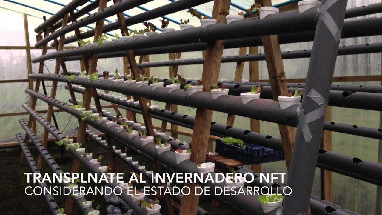 Invernadero Nft De Lechugas Hidroponicas En Villarrica