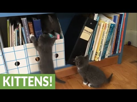 Eight foster kittens learn to explore