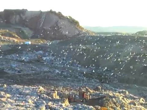Video of LRAD use at landfill for bird control