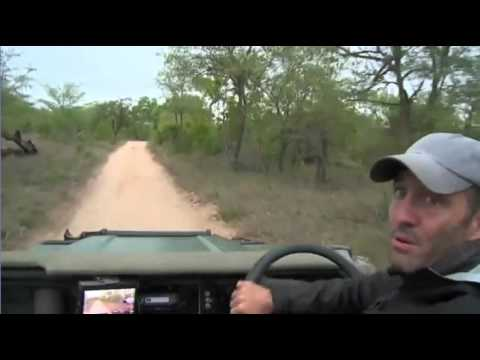 Oct 16 WildEarth Safari Sunset Drive Shortened due to rain
