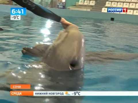 Пополнение в сочинском дельфинарии белуха по имени Каспер