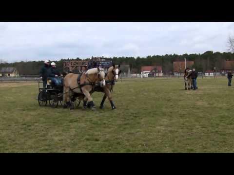 Bild: Titanen der RennbahnTV Brück - die große Kaltblut Pferdeveranstaltung