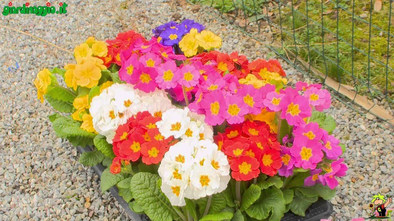 Bordure con piante annuali youtube for Piante annuali