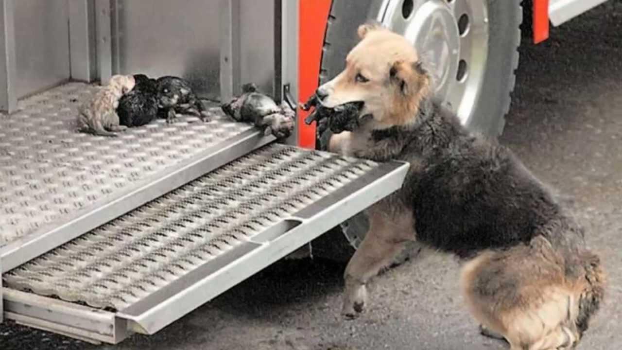 Instinto De Proteccion Animal  Perro Salva A 5 Cachorros
