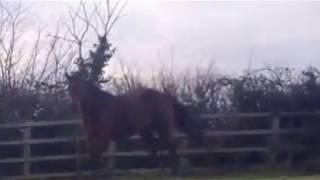 Horse With Broken Leg Bucking On The Spot.