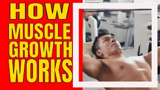 How Muscle Growth Works | How To Build Muscle At Home - Can You Build Bigger Muscles At Home?