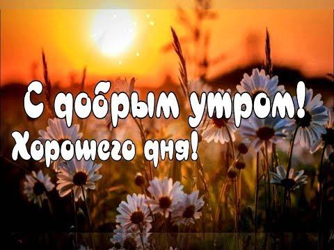 Желаю Вам Доброго Утра 🌷 Доброе Утро! Хорошего Дня! Красивое Музыкальное Пожелания Видео Открытки