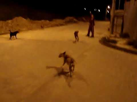 Attacked by stray dogs in Colombia
