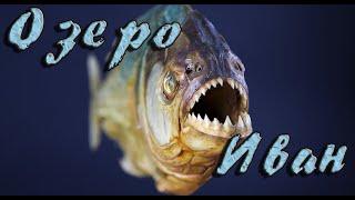 Забайкалье Озеро Иван Какие рыбы водятся и как называются