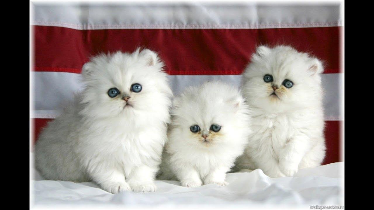 Картинки по запросу котята